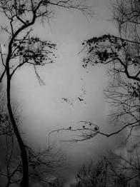 Illusionsbild-Baum-Frau